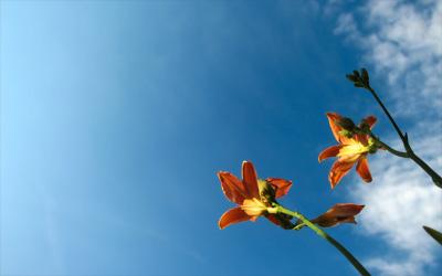 Sky vs. Flower